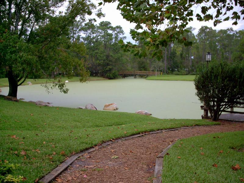 Pond behind meadow trading post